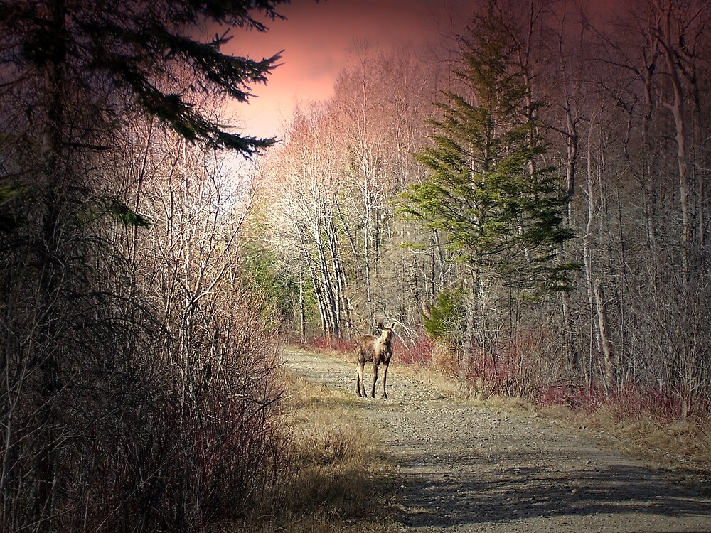 Moose At Sunrise 2 by Gene Cyr