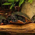 Talking Turtles by Charles Adams