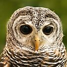 Owl by louise