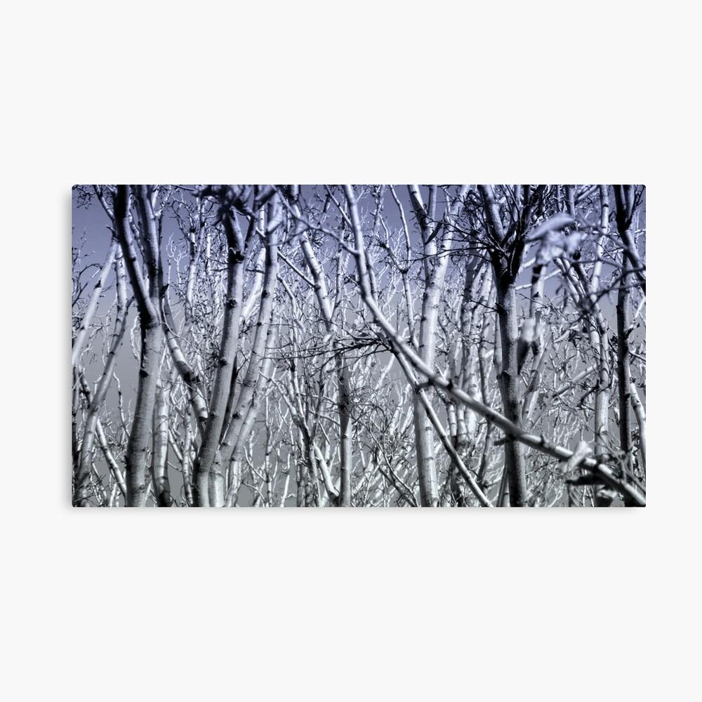 Hoher Kontrast Wald Foto Leinwanddruck