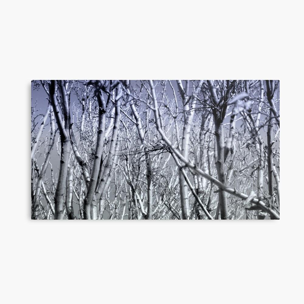 Hoher Kontrast Wald Foto Metallbild