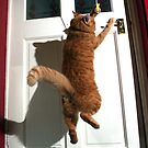 Cat jumping at door by turniptowers