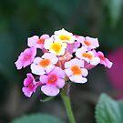 Little Bouquet by rmenaker