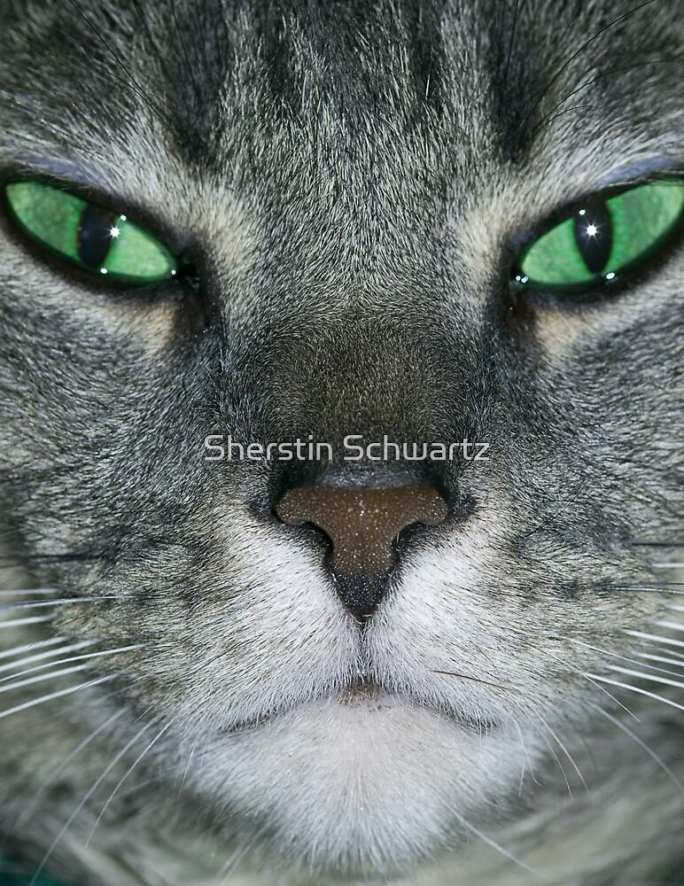 Stare. by Sherstin Schwartz