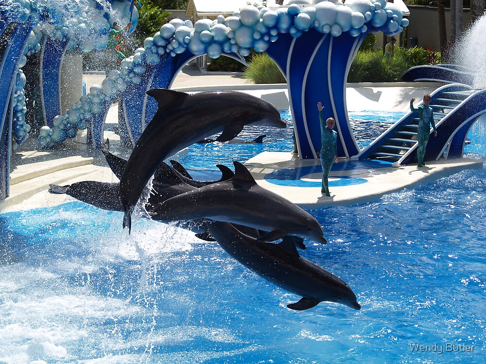 Dolphins at Sea World by Wendy Butler