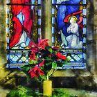 Christmas Poinsettia. by Ian Mitchell