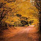 Leafy Lane by JEZ22