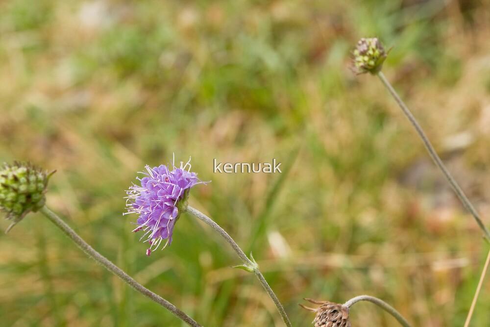 Purple Flower by kernuak