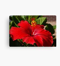 Red Hibiscus D50 Canvas Print