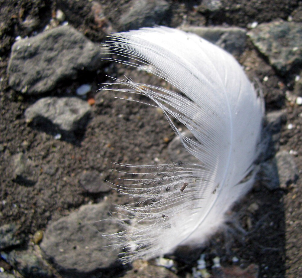 light as a feather by Caroline Anderson