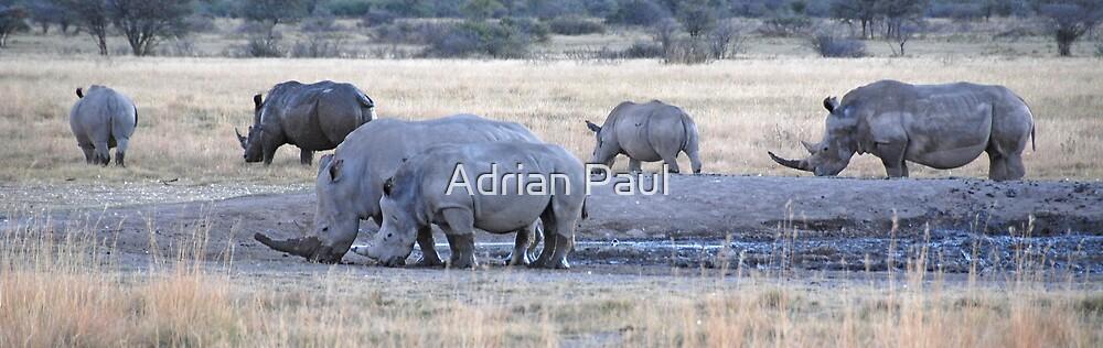 White Rhinos, Khama Rhino Sanctuary, Botswana, Africa by Adrian Paul