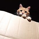 Ginger cat looking into cardboard box by turniptowers