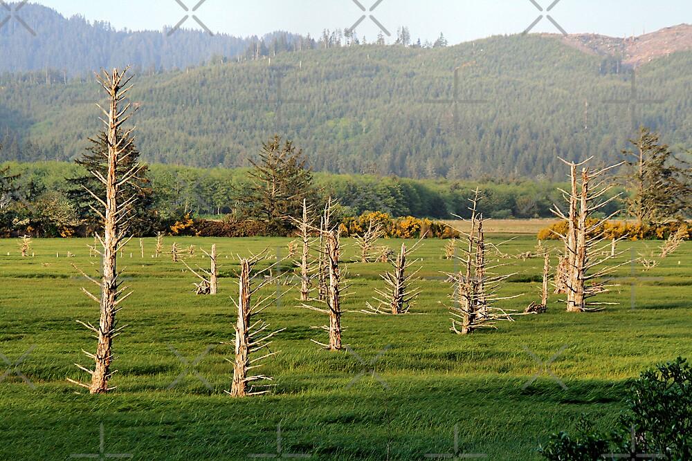Dead Tree Bay by Tina Bentley
