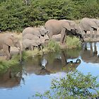 Elles at the waterhole by Anthony Goldman