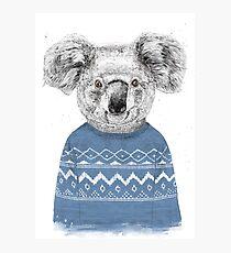 Winter koala Photographic Print