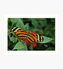Tiger Longwing Art Print