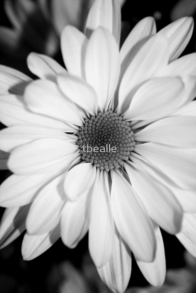 New Beginnings by Terri~Lynn Bealle