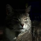 Tabby cat in shadow by turniptowers