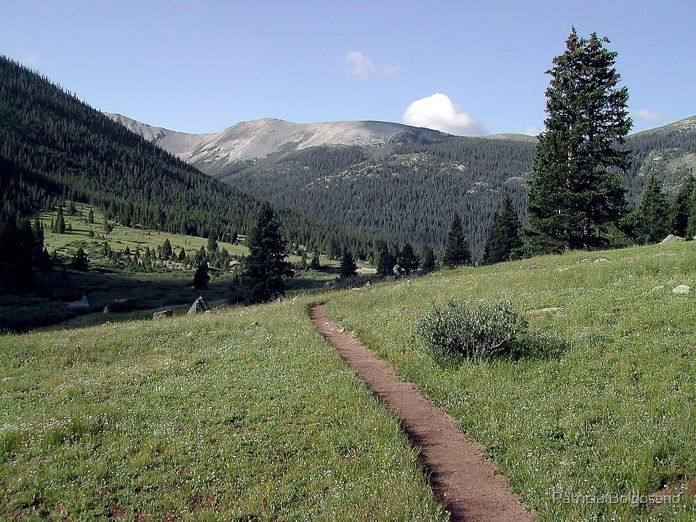 Colorado Trail by Patricia Bolgosano