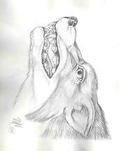 loki wolf by pneumike