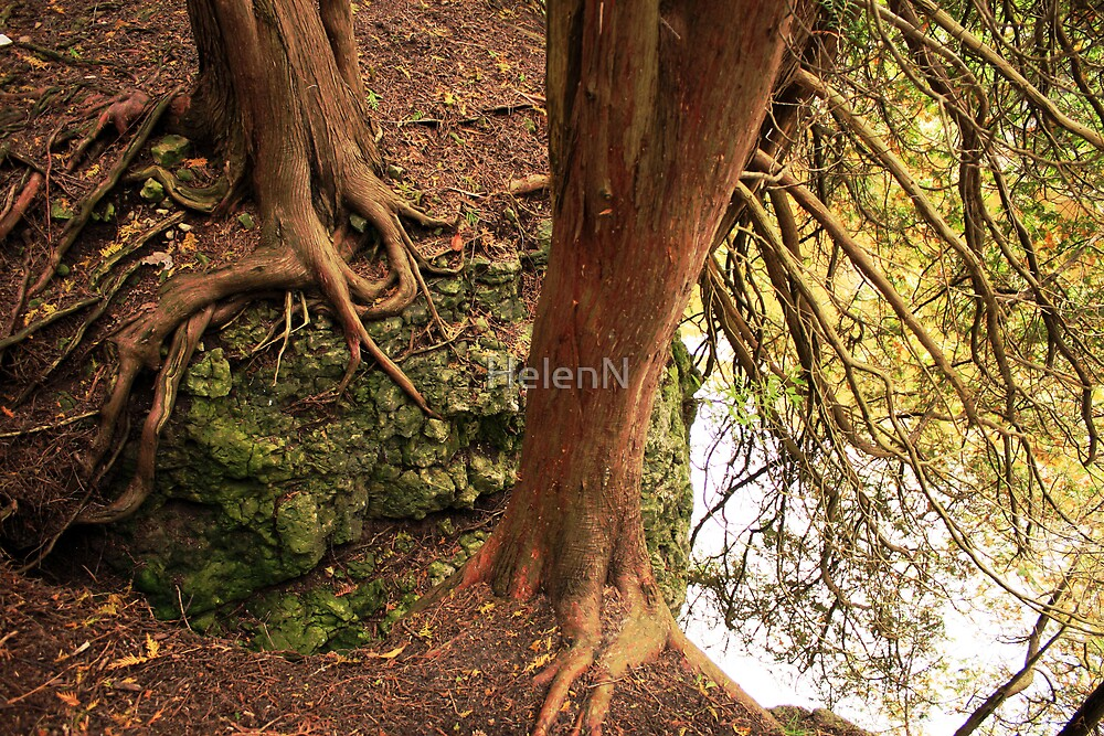 Roots by HelenN