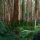 Dandenong Ranges  by Christine Wilson