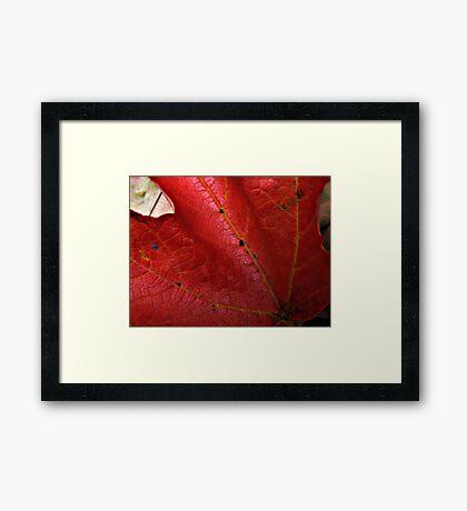 Turning Leaf 2 Framed Print