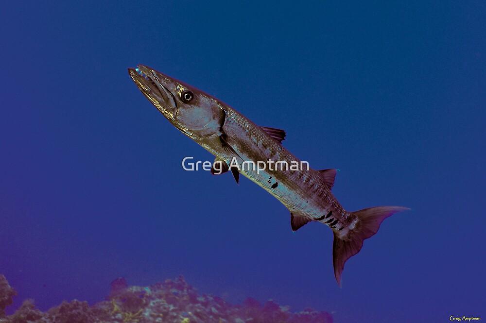Barracuda by Greg Amptman