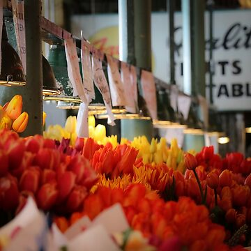 Market Tulips by ccsaintdawg21
