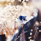 Blue by BryanLee
