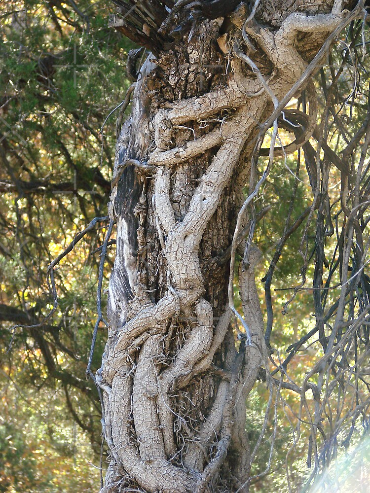 Twisted Trees by Kimberly Miller