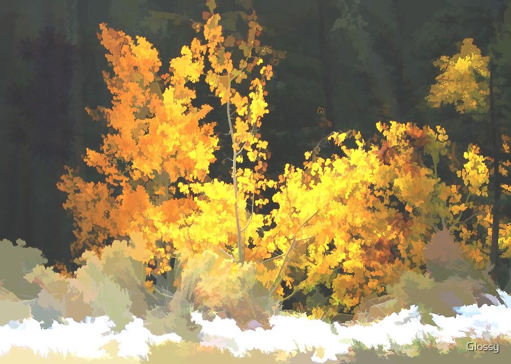 Aspen Glow by Glossy