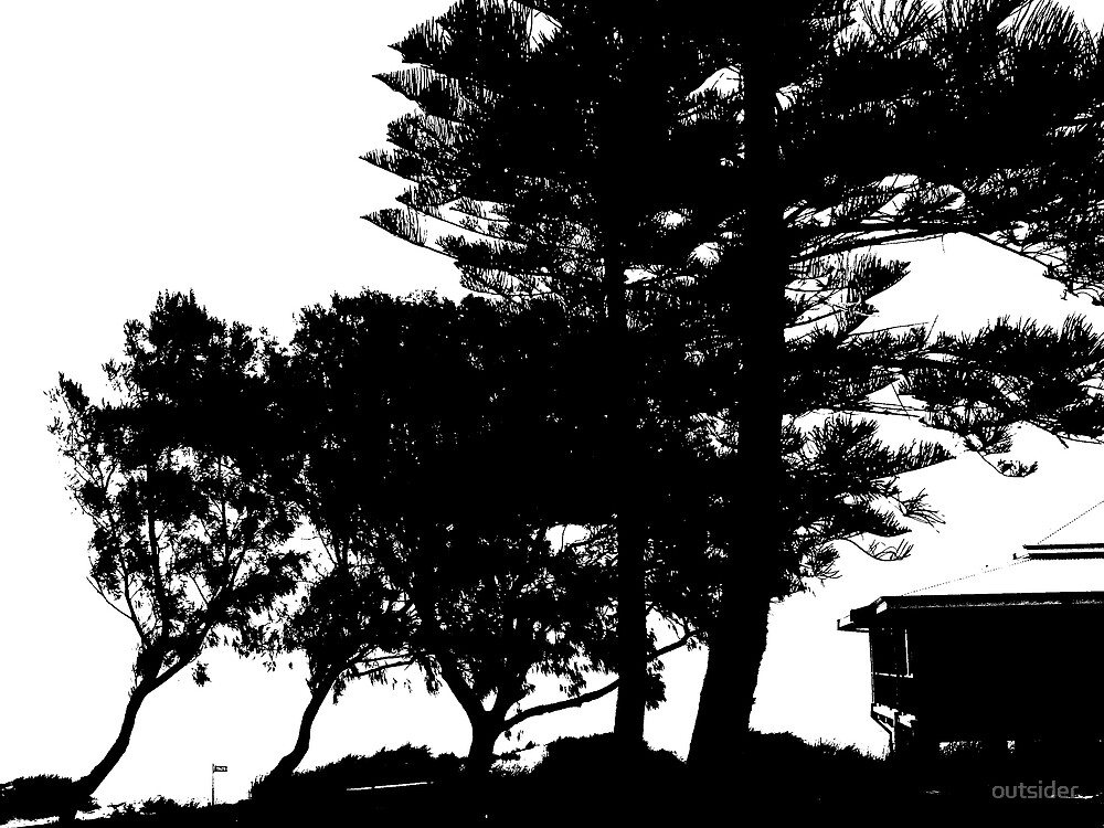 Beach Pines by outsider