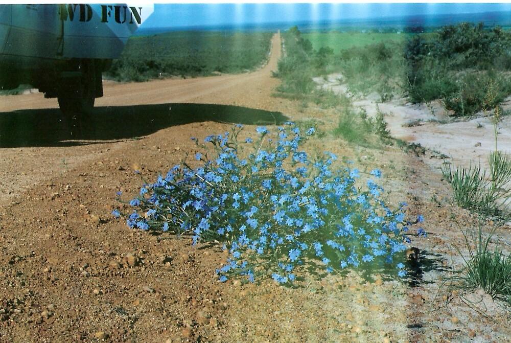 WA Wildflower by mariajd