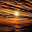 Taft Beach Sunset by Tina Bentley