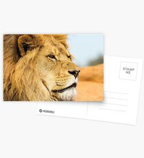 Big lion looking far away Postcards