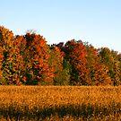 Fall Colors by Daniela Weil