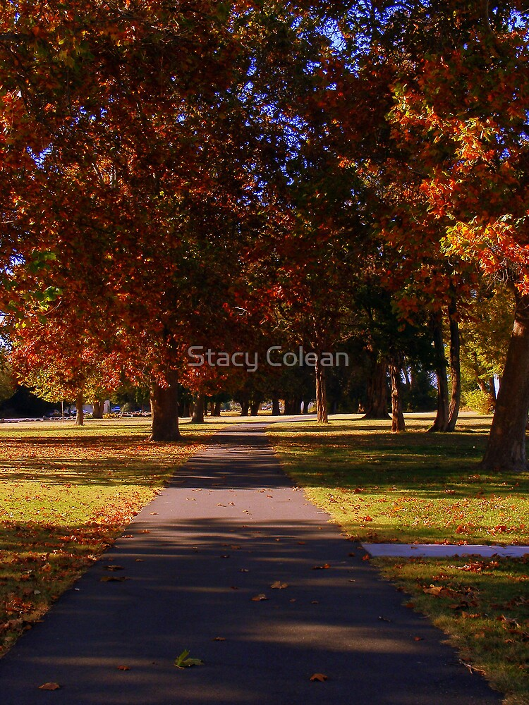 Fall by Stacy Colean