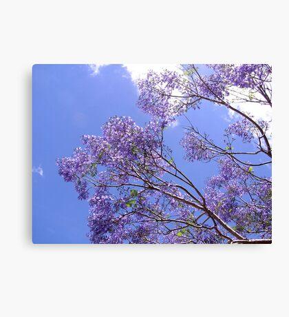Jacaranda Blue  Canvas Print