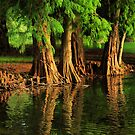 Under The Everglades by Varinia   - Globalphotos
