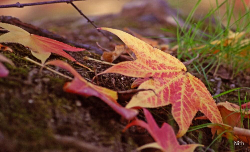 Autumn by Nith