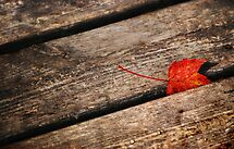 Red Leaf & Wood Planks by Laurie Minor