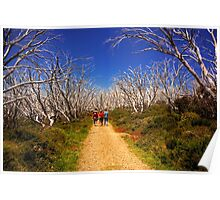 Walking in the Alpine National Park Poster