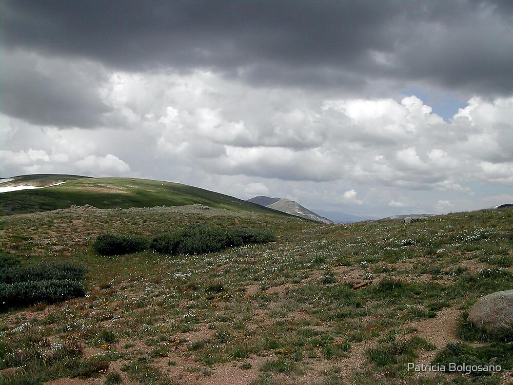 Colorado by Patricia Bolgosano