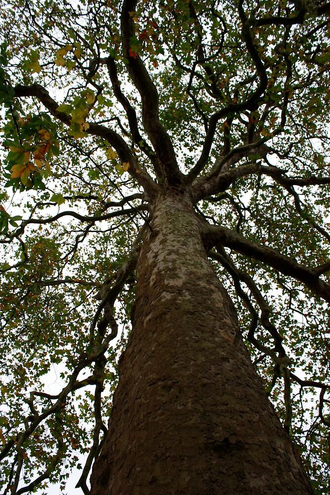 Kew Plane Tree by mrbpaints