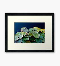 Stillness - Pond Waterlilies Framed Print