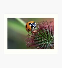Spikey Nectar Art Print