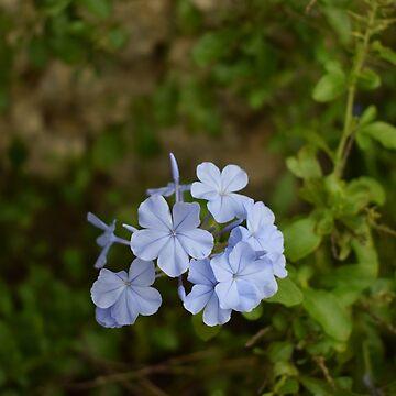 Beautiful flowers by imgabsveras