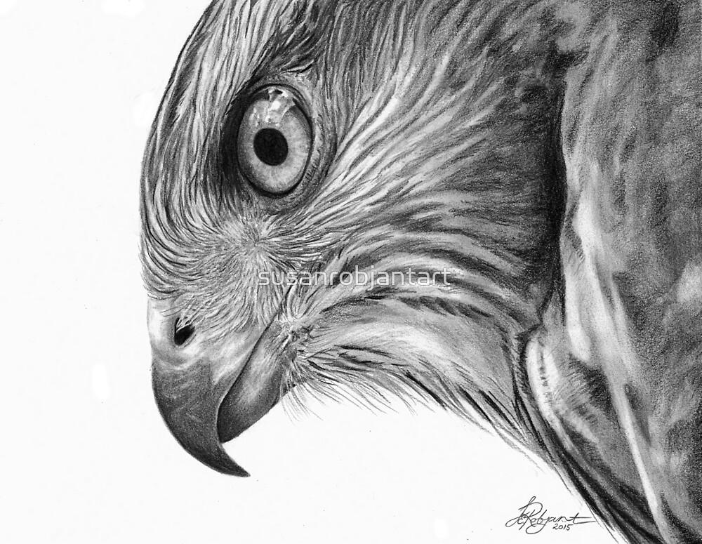 """""""Coopers Hawk"""" by susanrobjantart"""