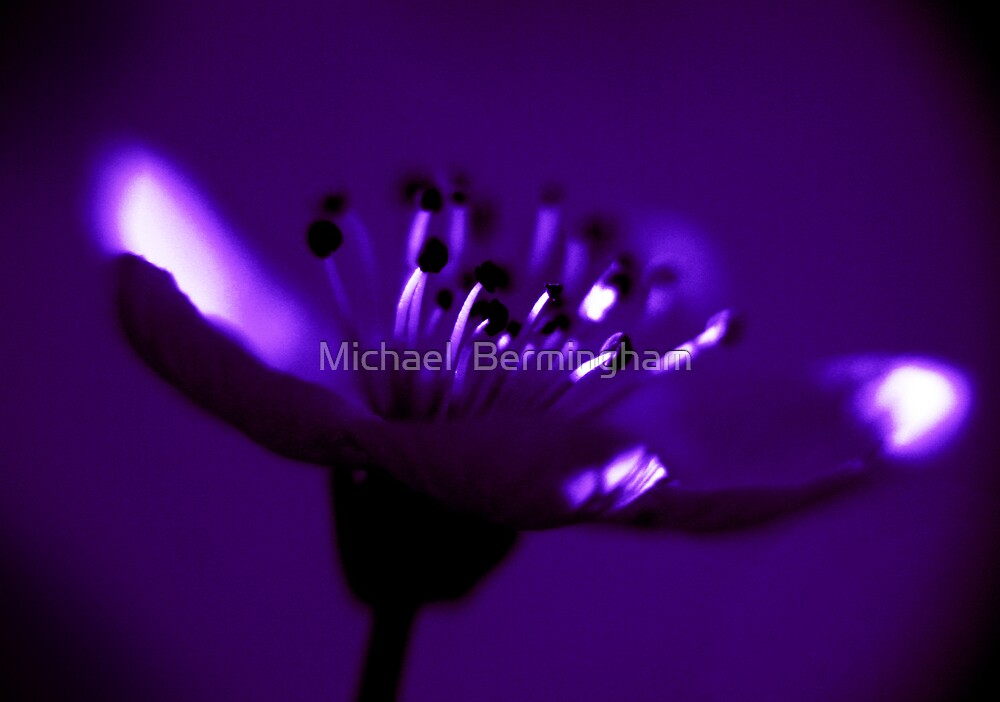 Violet by Michael  Bermingham